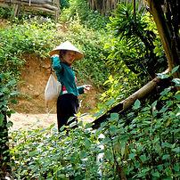 Découverte des Lo Lo Noirs dans le Nord du Vietnam