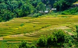 Les rizières en terrasses du Vietnam