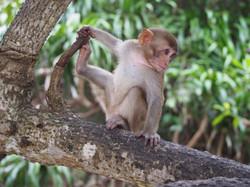 Découvrez les singes de Cuc Phuong
