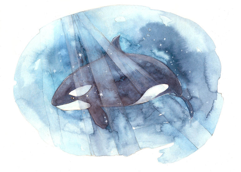 Be Free Orca