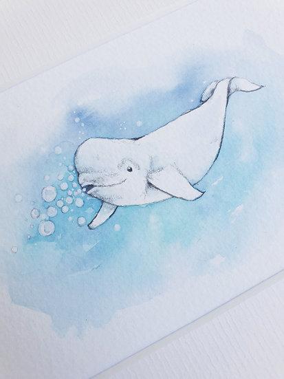Beluga watercolour