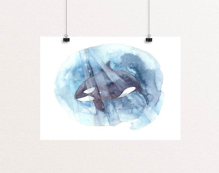 Be Free Orca print