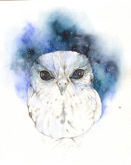 Original Zeus the Owl framed Watercolour