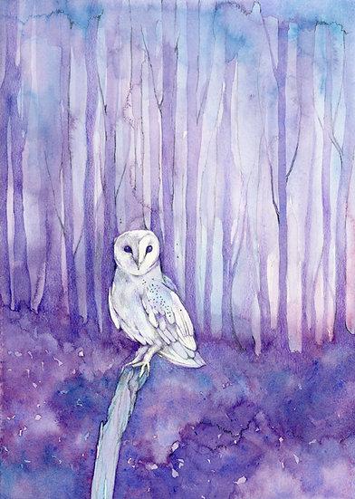 Moon the Owl