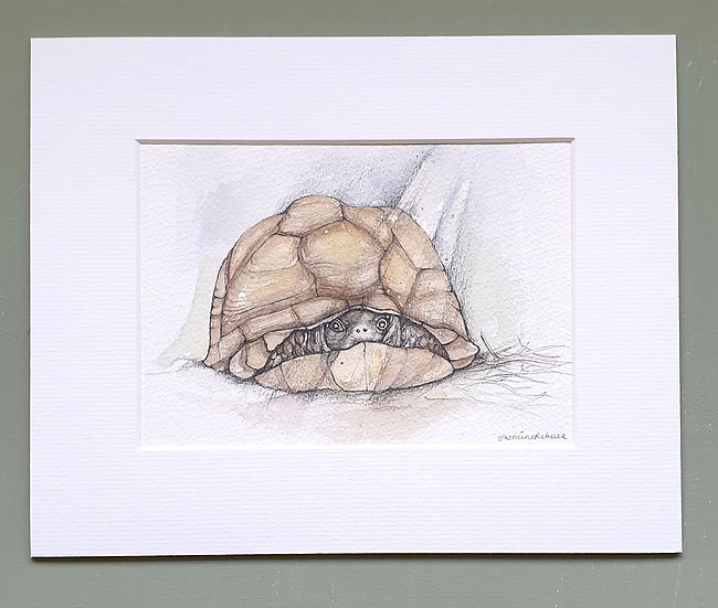 Shy Tortoise Mounted Watercolour