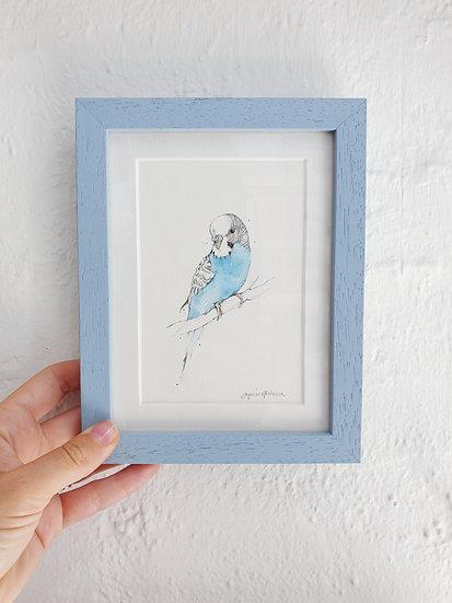 Blue Budgie Watercolour