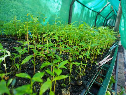 Nursery germination area.JPG