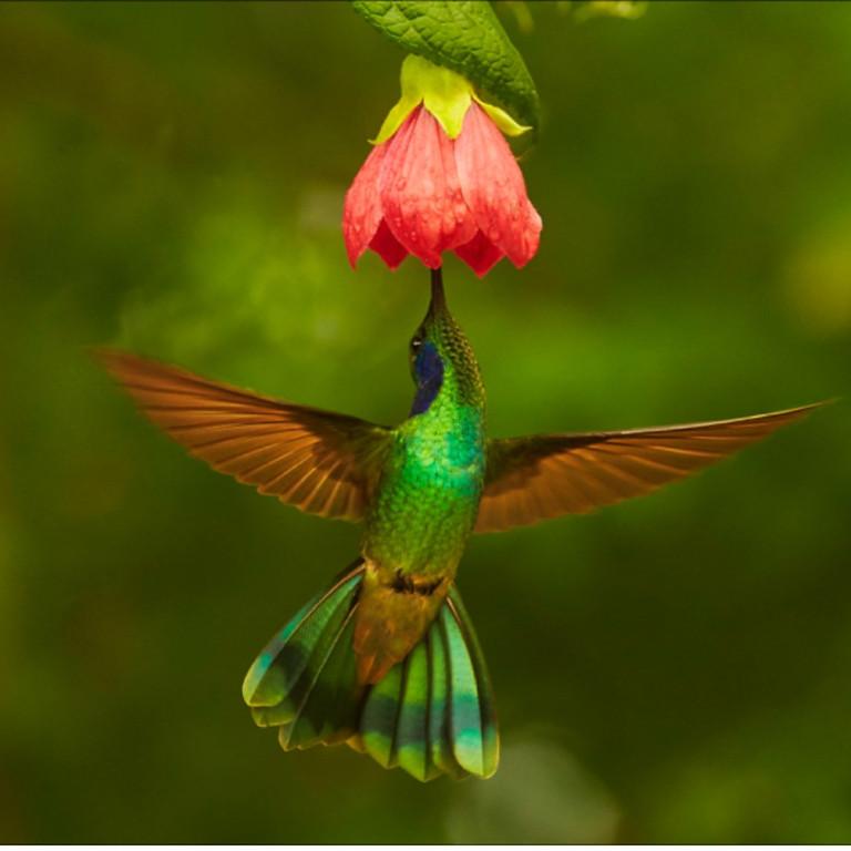 WORLD BIRDS YOU MUST SEE – COSTA RICA & ECUADOR
