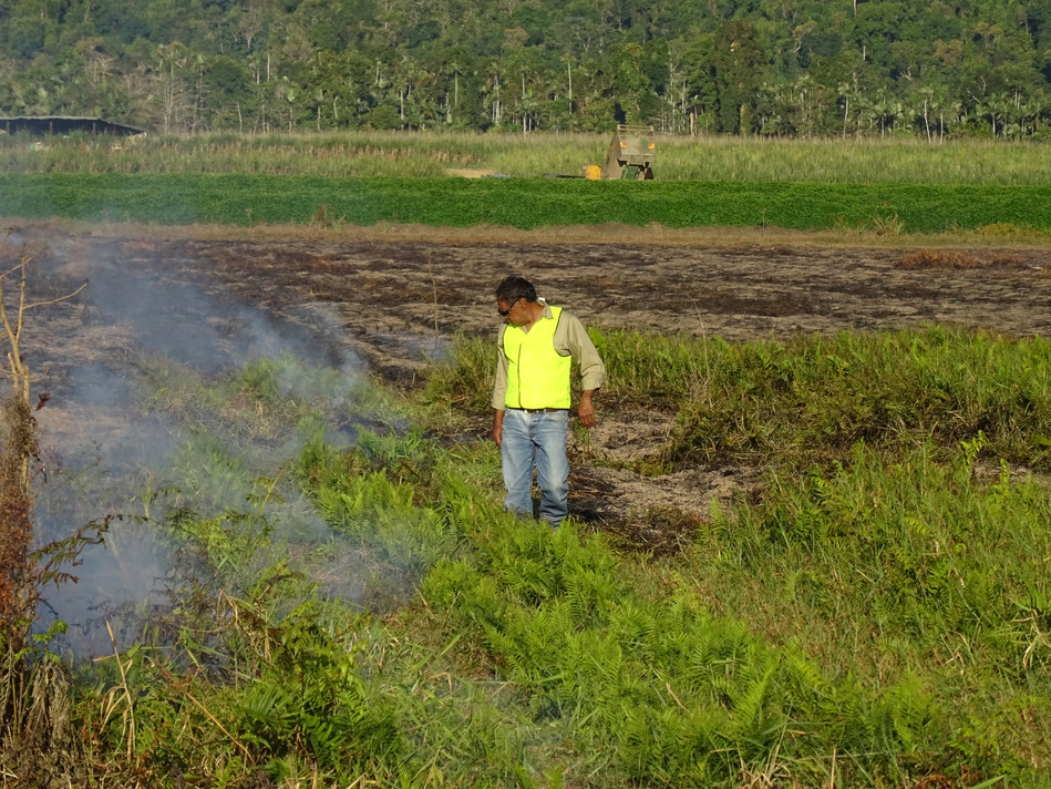 Constructed wetland, Dennis checking bur