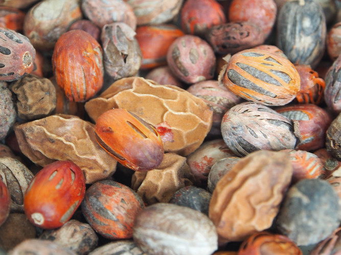 Queensland Nutmeg (Myristic insipida) se