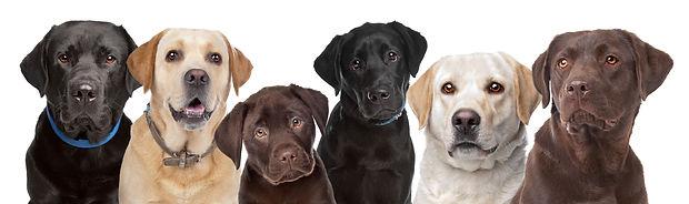 Diabetic Alert Dogs of America