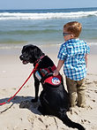 Diabetic Alert Dog Margot