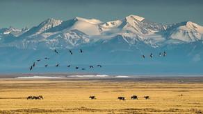 Trump Administration Scrambles to Sell Alaskan Land As Indigenous Activists Push Back