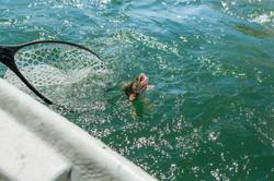 jackson-hole-fishing-adventures-19.jpg