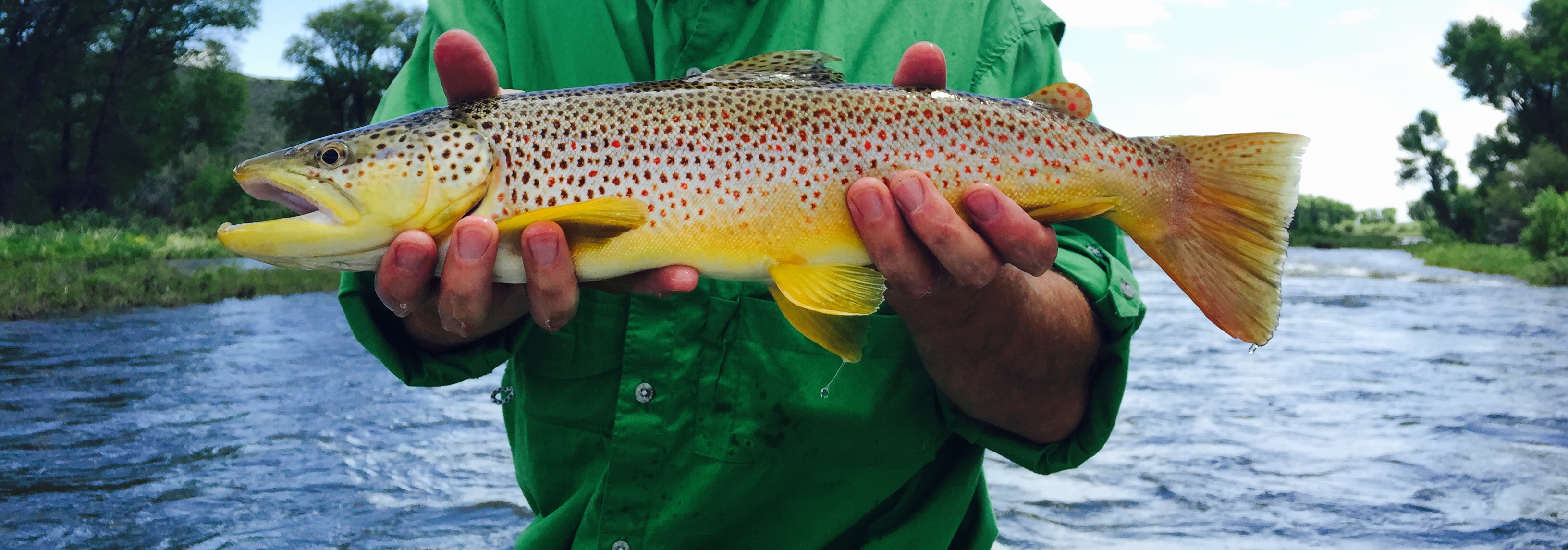jacksonholefishing