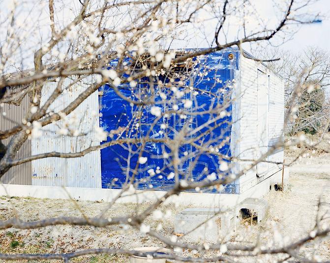 梅とコンテナs.jpg