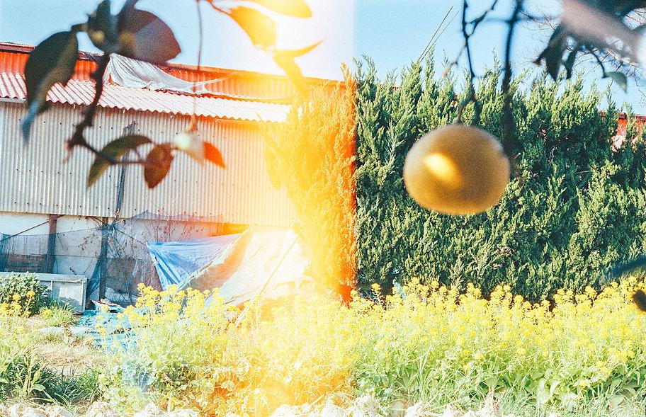 光と蜜柑.jpg