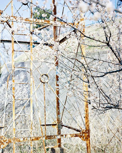 鉄塔と梅.jpg