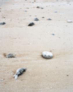 海辺15.jpg