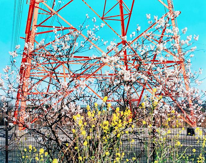 赤い鉄塔.jpg