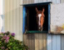 馬と紫陽花.jpg