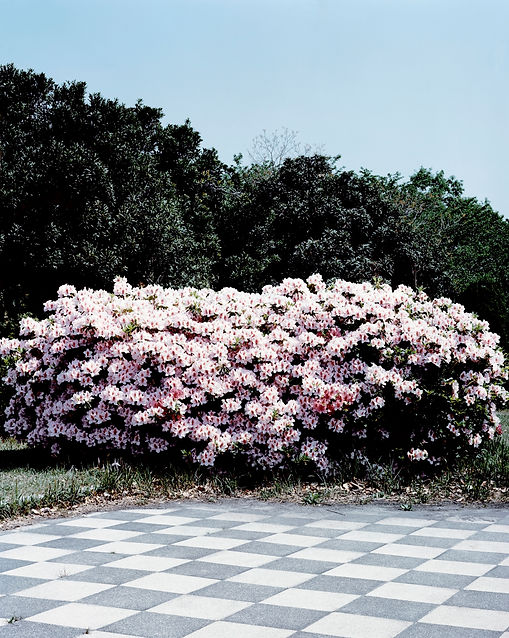 花と幾何学.jpg