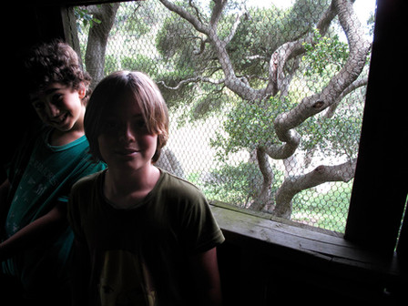 In The Treehouse