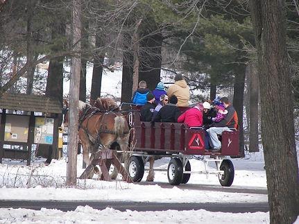 horse sleigh.jpg