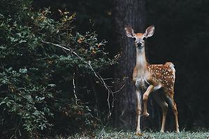 wildlifemanagement.jpg