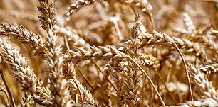 AGRONRGOCIO.jpg