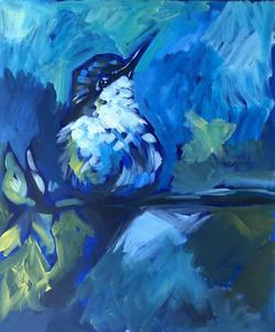 Taz Azure Kingfisher