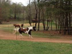 Happy Horses on track