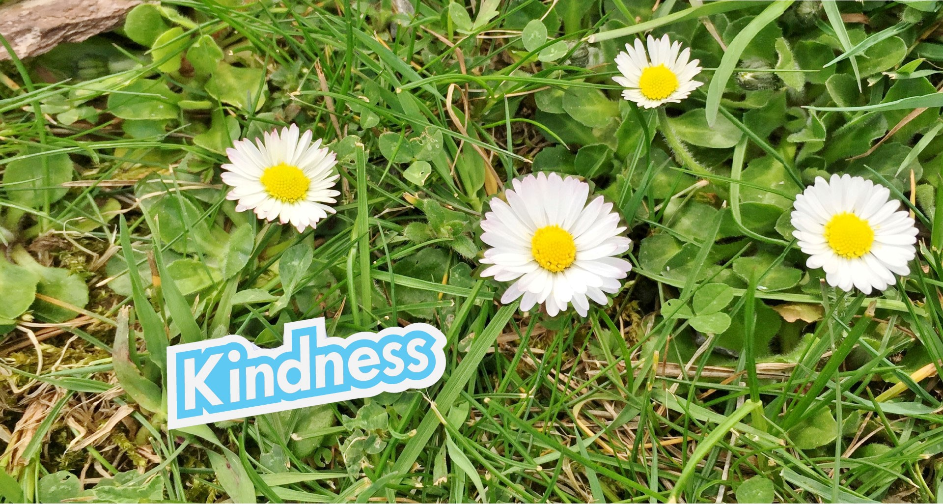 Kindness main flower