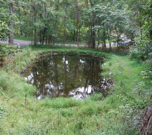 frog pond below Lodge