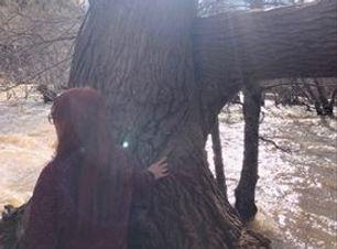 セドナの木.jpg
