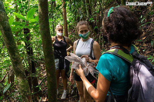 Hikes at the Tijuca National Forest