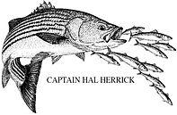 Hal Herrick.jpg