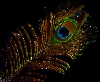 purepng.com-peacock-featherobjectspeacoc