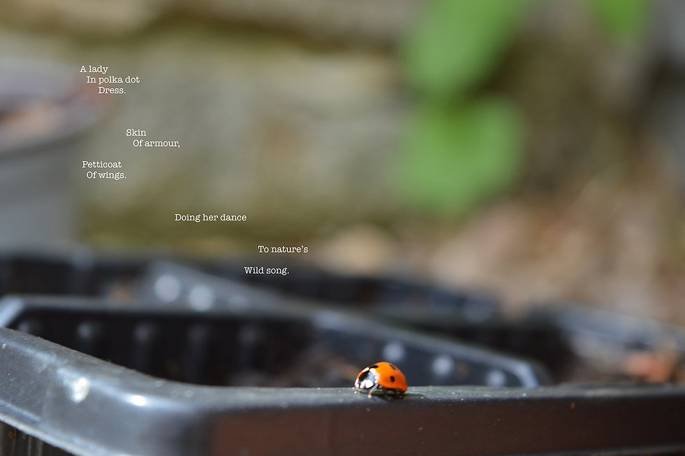 Ladybird sm .jpg