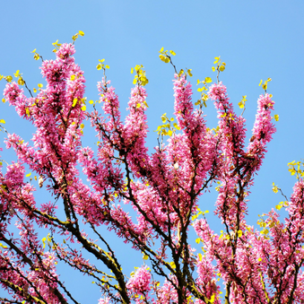 Spring, your season for rejuvenation, renewal and regrowth!