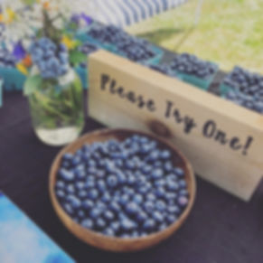 blueberries vancouver island