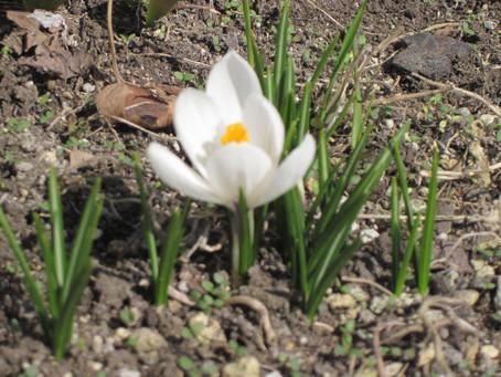 久しぶりにHPをメンテナンスしました。今日の函館は春の嵐か? 久しぶりの風雪に見舞われ気分はダウン。先日見つけた春の便りもこの風雪で大丈夫だろうか? 春よ来い早く来いと願ってやまない。