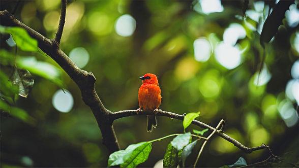 Maler Zieri, ökologisch & umweltfreundlich