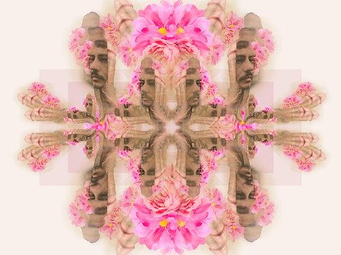 Penis Flower Face Framed