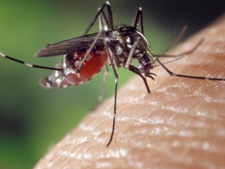 傳染病有解方了!!!從昆蟲預防可怕的登革熱、茲卡與西尼羅河病毒