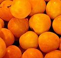 apricot-1534491_1920.jpg