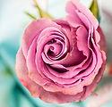 rose-3142529_1920.jpg
