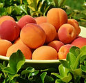 apricots-1522680_1920.jpg