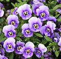 flowers-200270_1920.jpg
