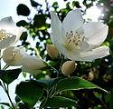 flower-3444238_1920.jpg